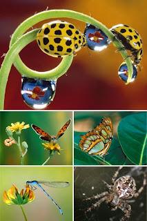 Большой сборник обоев с насекомыми и арахнидами