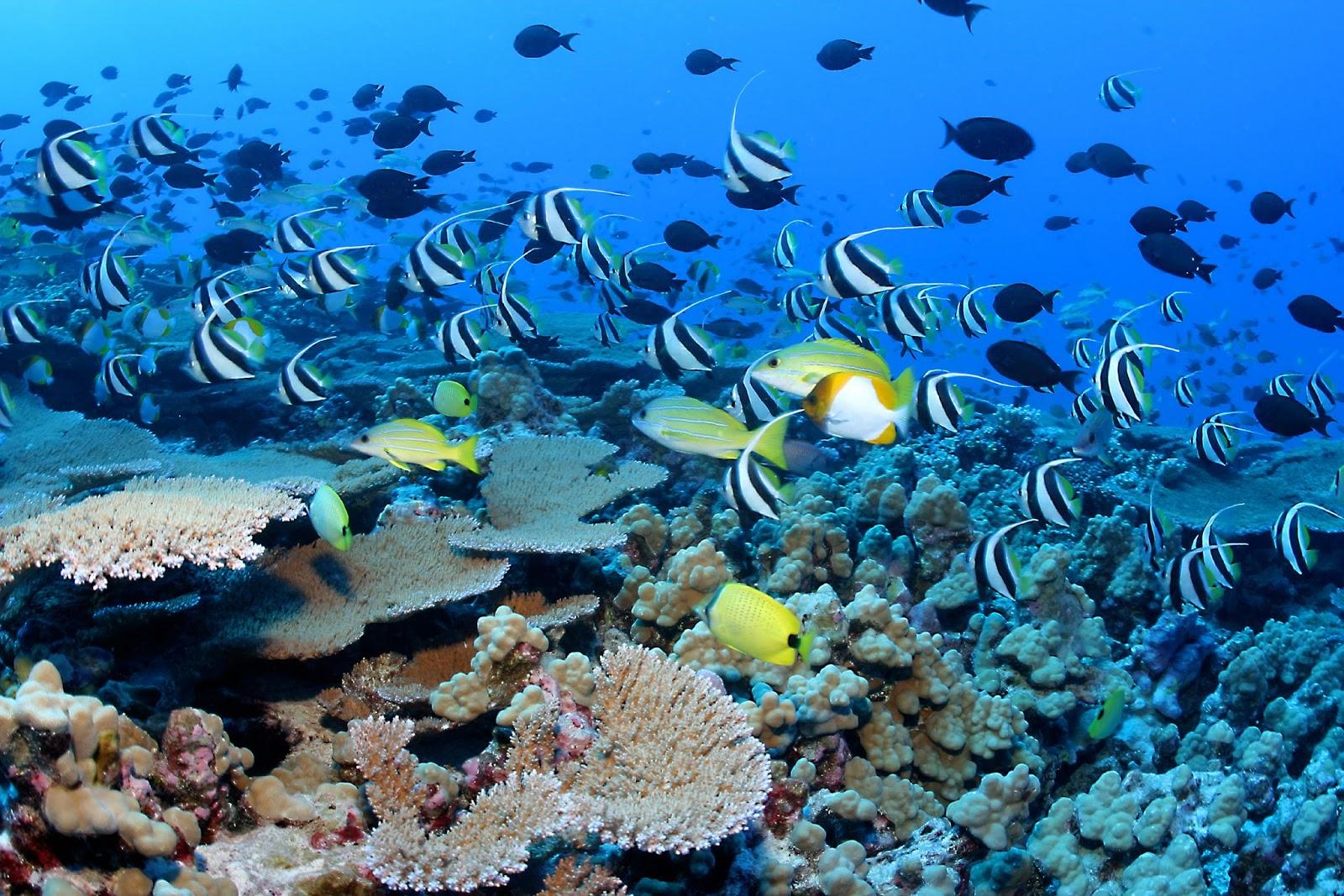 Ciencias de Joseleg Ecosistemas de agua salada arrecifes de coral