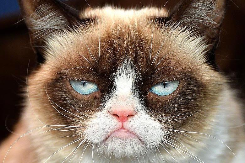 Image result for bummer cat