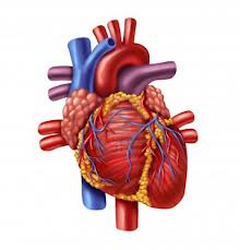 http://www.salud.bioetica.org/corazon.htm