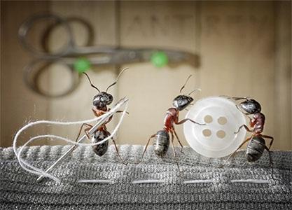 El mundo de las hormigas