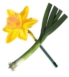Image of crossed daffodil and leek, the symbols of Wales for St David's Day.