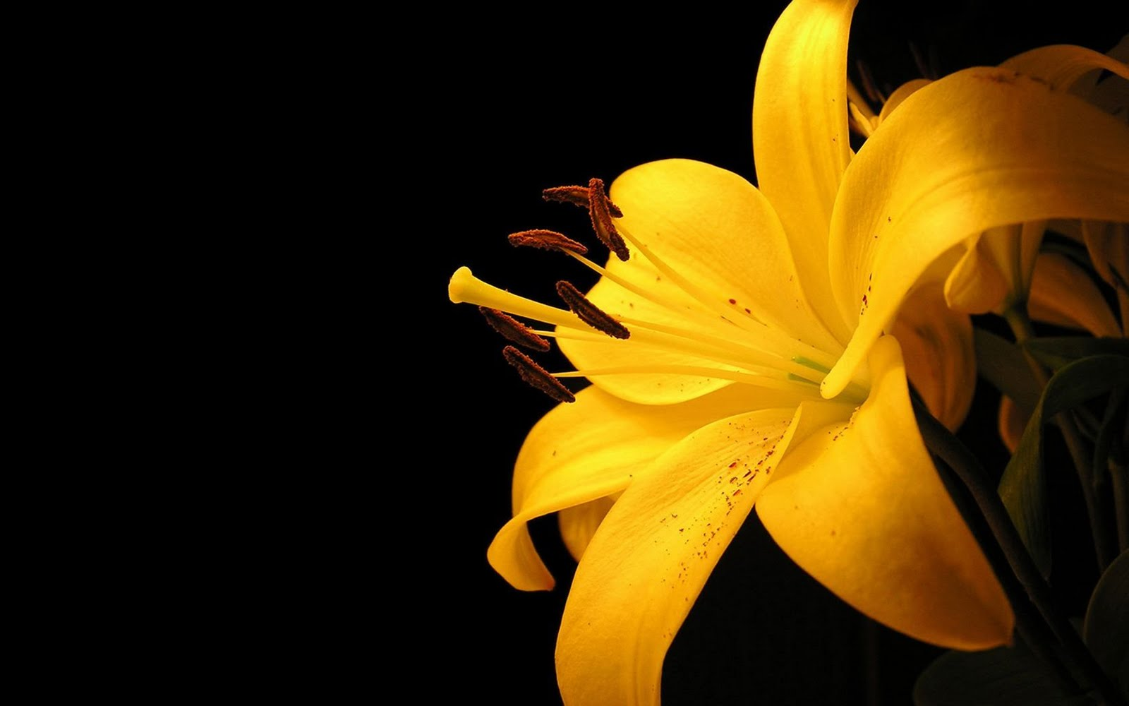Elva Barnett: yellow flower wallpaper