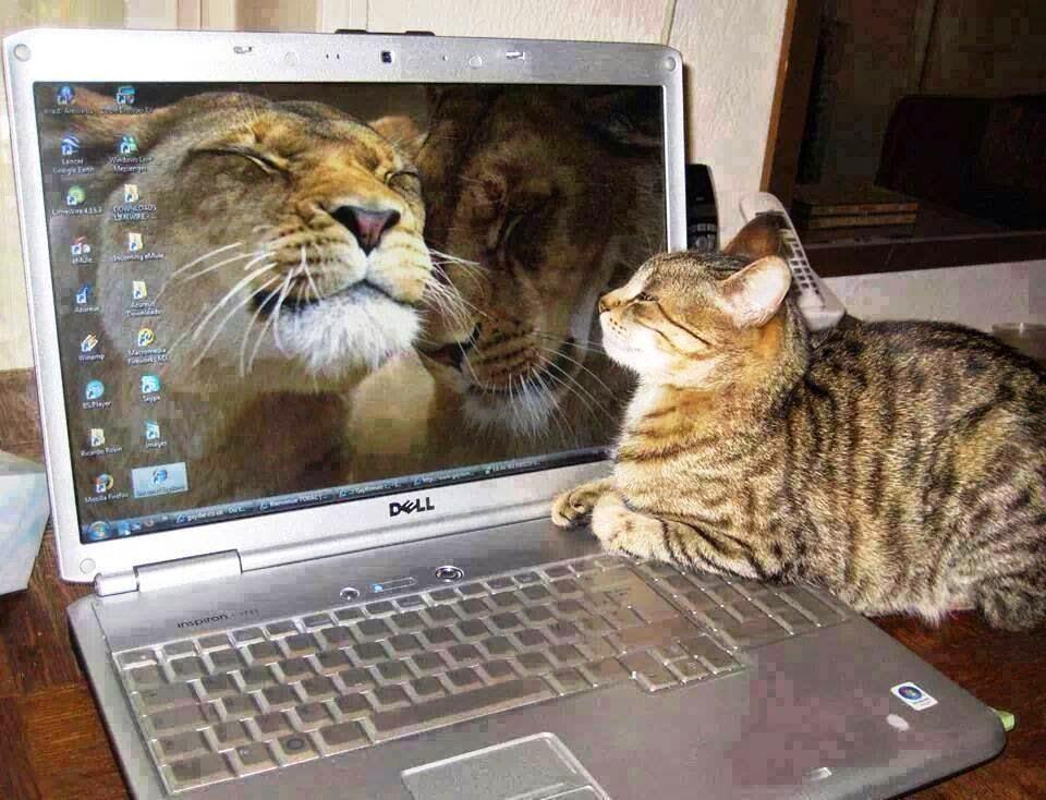 Когато котката ви се мисли за Лъв Смях - смешни gifs картинки и снимки с надписи, забавни клипчета и яки демотиватори