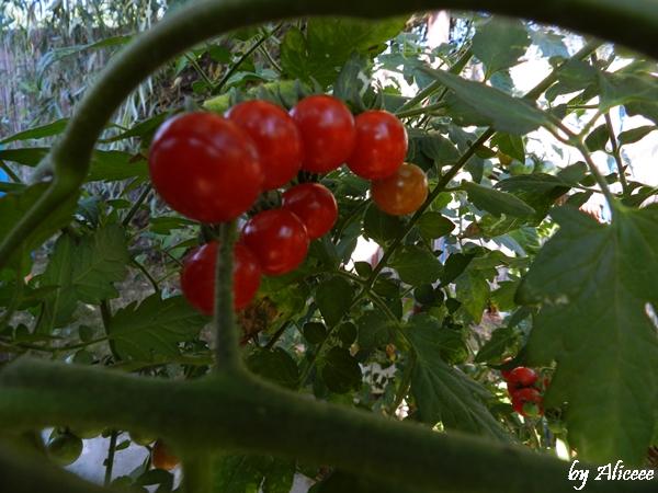 rosii-eco-mila-23-pensiunea-vanessa