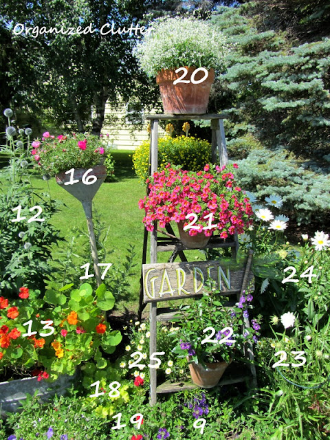 Cottage Garden Planting Diagram