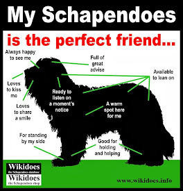 What does the schapendoes like?