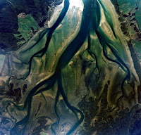 Tidal channel network and mangroves in the Rangaunu Harbour, North Island, New Zealand. (Photo Credit: Department of Conservation, NZ) Click to Enlarge.