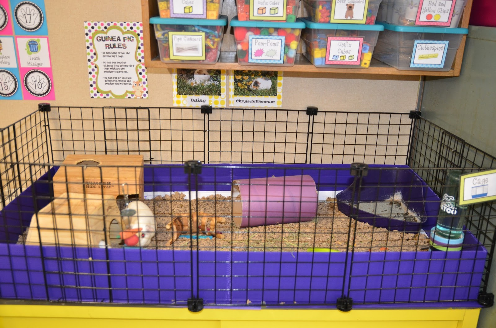 Critters in the classroom c c guinea pig cages for Making a c c cage