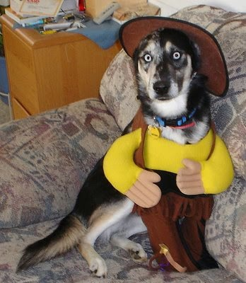 Toy Story Woody Dog Halloween Costume