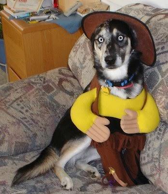 Toy Story Woody Dog Halloween Costume
