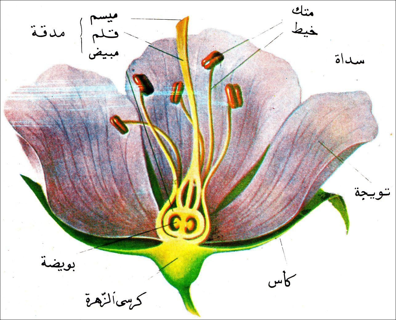علم النبات العام pdf