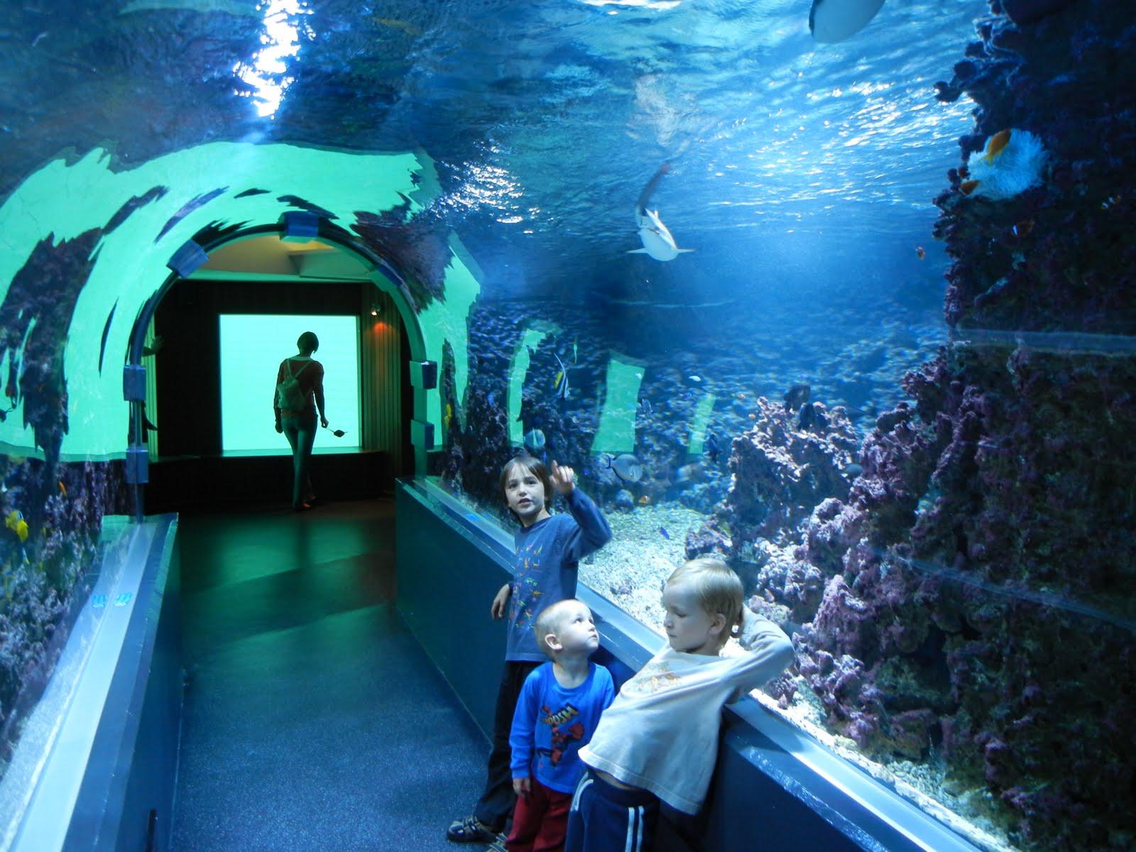 got memberships to the bergen aquarium today akvariet i bergen