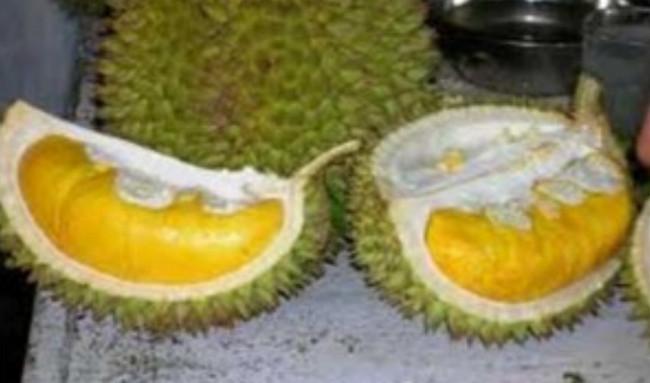 Durian Sukun (Karanganyar, Jawa Tengah) - www.jurukunci.net