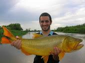 El dorado en el  río paraná
