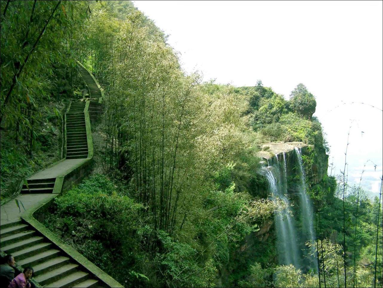 Shunan Bamboo Sea The Biggest Natural Bamboo Forest