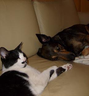 TANGO (gato) y CUYÉN (perra). NUESTRAS MASCOTAS DUEÑAS DE CASA
