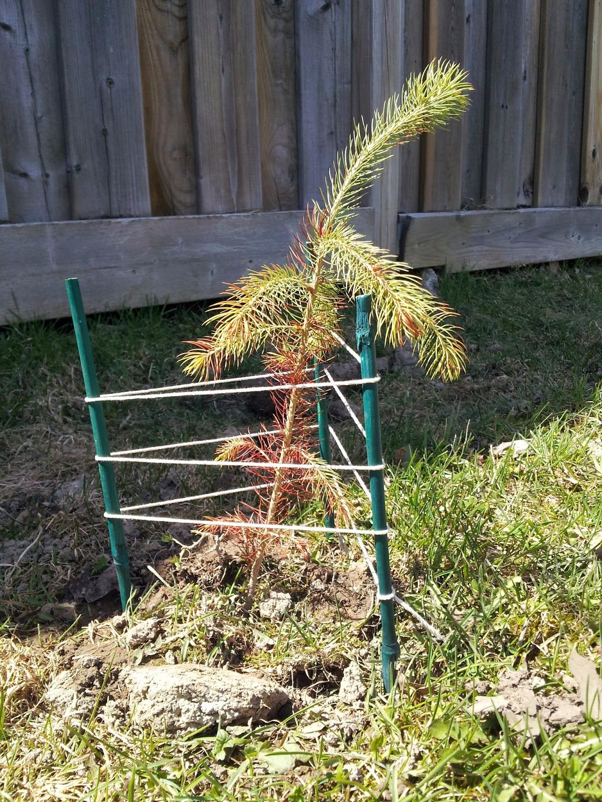 Earth Day Tree Sapling, kids activities