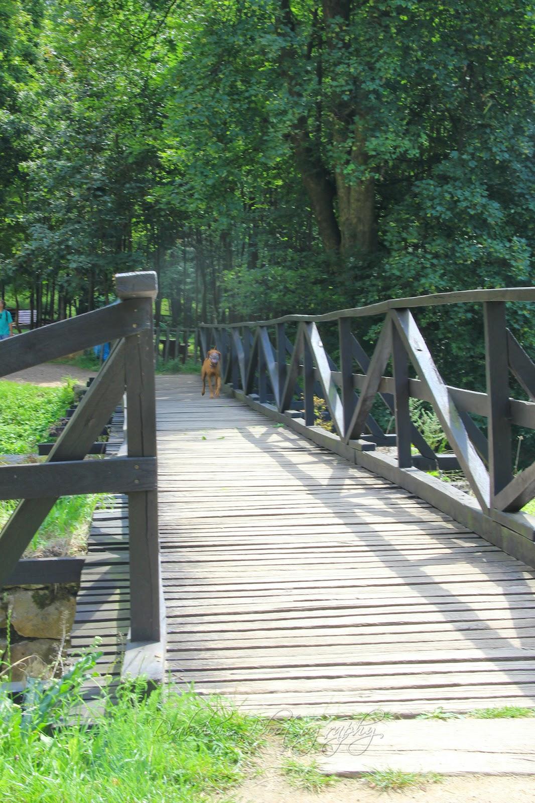 Vstupní most/The Entrance Bridge