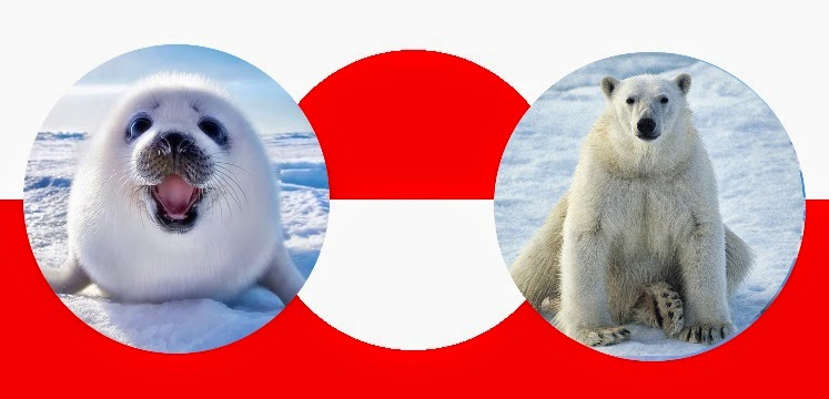 Greenlandic seal and bear