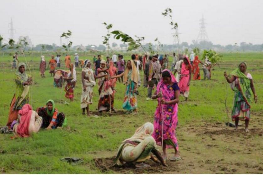 50 milionów drzew