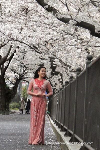 Mc Hồng Phượng ngẩn ngơ trước hoa anh đào Nhật Bản 9