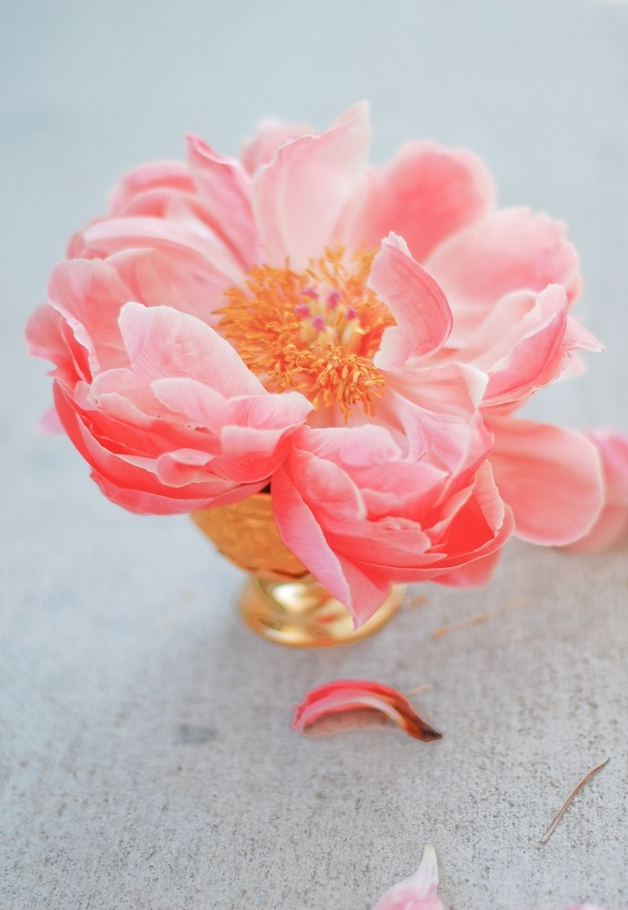 Blooming possibilities with a coral peony | Photography via Chandara Creative