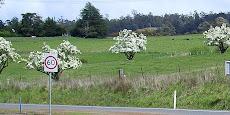 Spring in Tassie