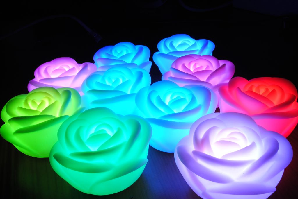 Biashop for Color changing roses