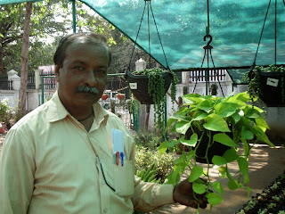 Arun explaining a trick of growing creeper variety of moneyplant