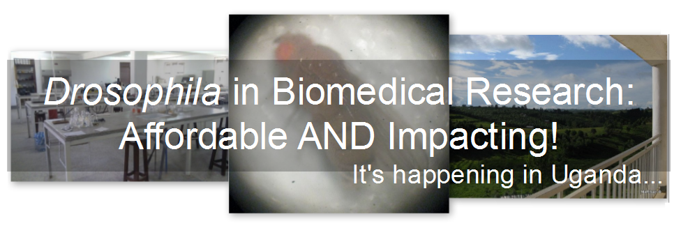 Drosophila in Biomedical Research: Affordable AND Impacting!