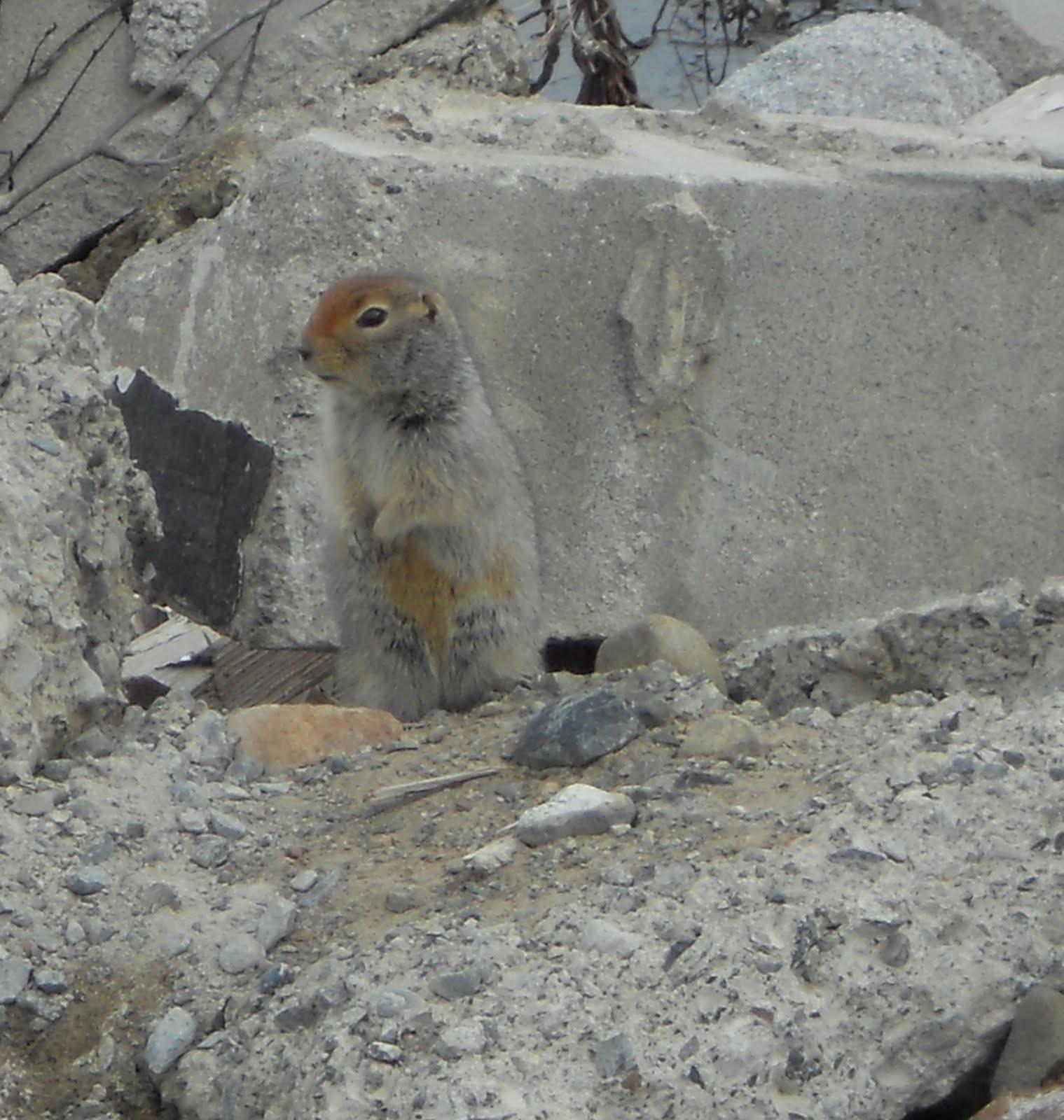 YukonNewsletter: Mai 2011