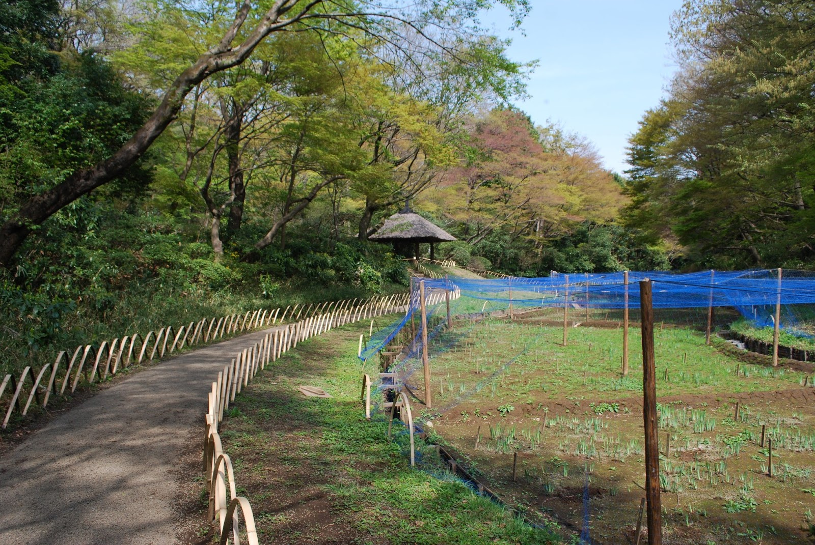 Meiji Jingu forest and imperial garden