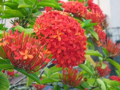 Flores Rojas, parte 7