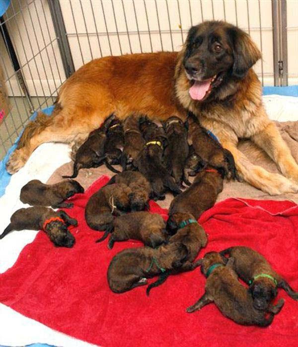 25 περήφανες σκυλίτσες φωτογραφίζονται παρέα με τα κουταβάκια τους - kollima.gr