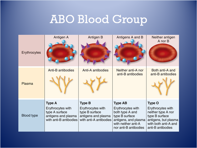 Abo blood group genetics will
