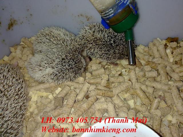 http://www.bannhimkieng.com/2013/08/cac-be-nhim-pintos-cua-thang-8.html