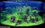 cara merawat aquarium, akuarium laut, akuarium air tawar