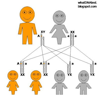 diagram of X-linked dominant genetic inheritance pattern, father is affected, mother is normal, all daughters affected, all sons normal, by whatdnatest