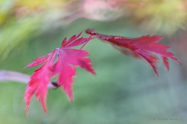 Gartenbilder, Fotografie, Makro Fotografier, Makrofotografie