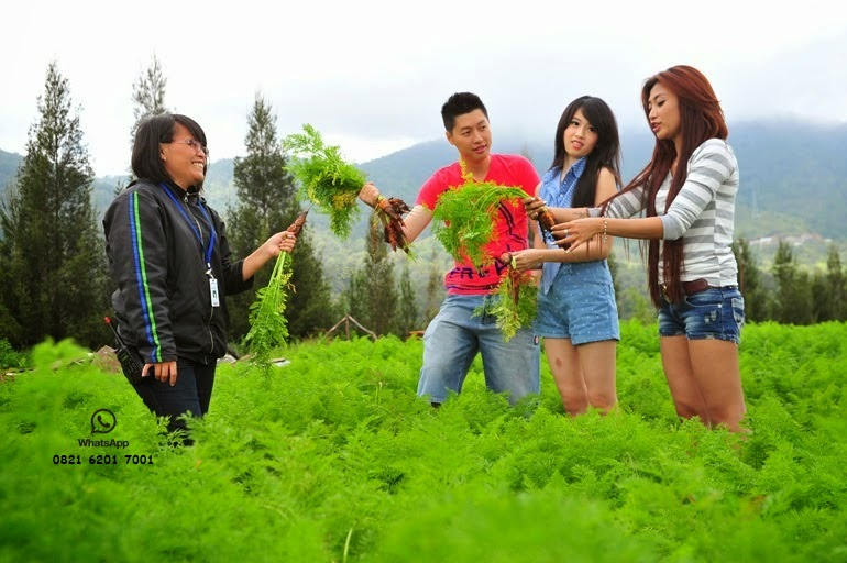 FARM TOUR MEDAN TAMAN SIMALEM RESORT