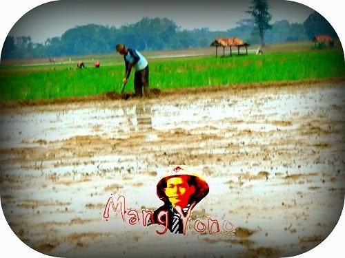 Musim tanam padi telah tiba