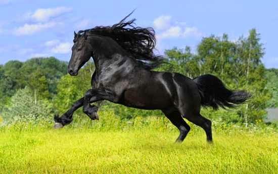 Caballo negro corriendo