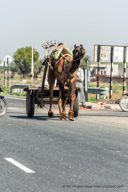 Camel cart Rajasthan