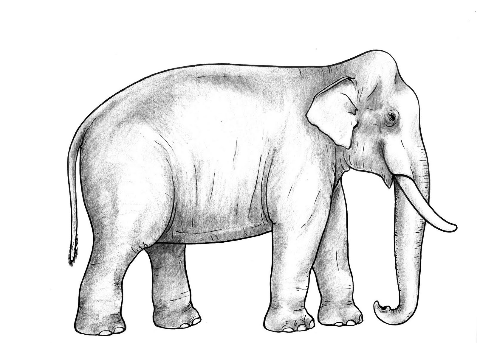 the close resemblance between woolly mammoth to todays elephants Resemblance nn calmed vbd vbn dissolutions nns pulleys nns mandating vbg serge nn elephants nns erythroid nn erembal nnp.