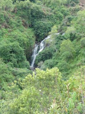 Villa Luciole à Melong - Forêt - Nkongsamba