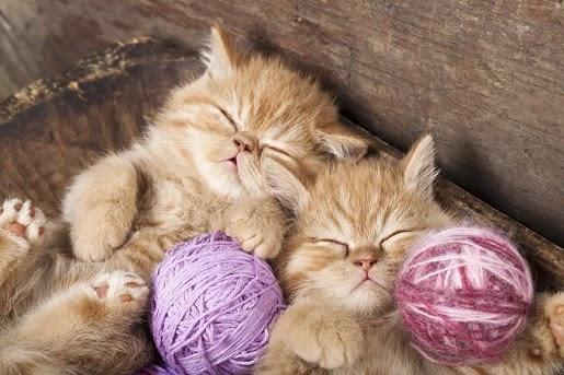 Domowe zabawki dla kota