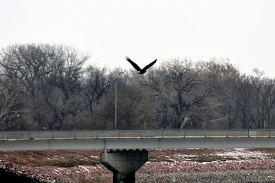 Let Nature Inspire and Center You - Eagles return to Iowa - Easy Life Meal & Party Planning