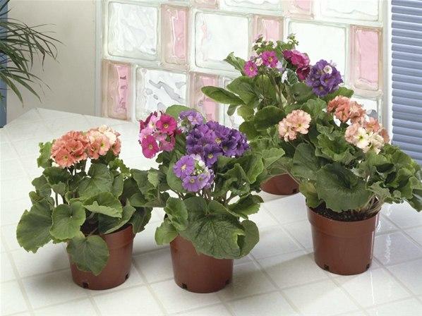 Janete na web plantas para ambientes pequenos for Plantas para estanques pequenos