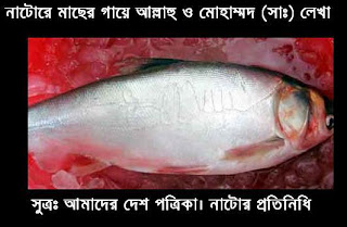 Amazing fish, in allah's name